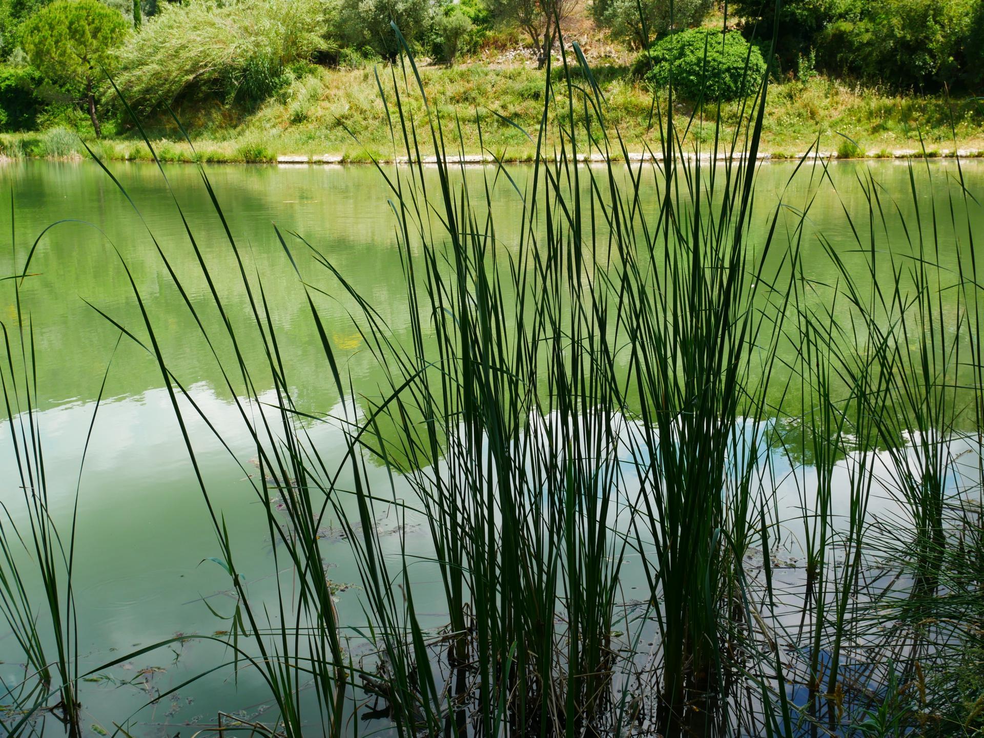 Le lac de la risse a callas dans le var provence 4