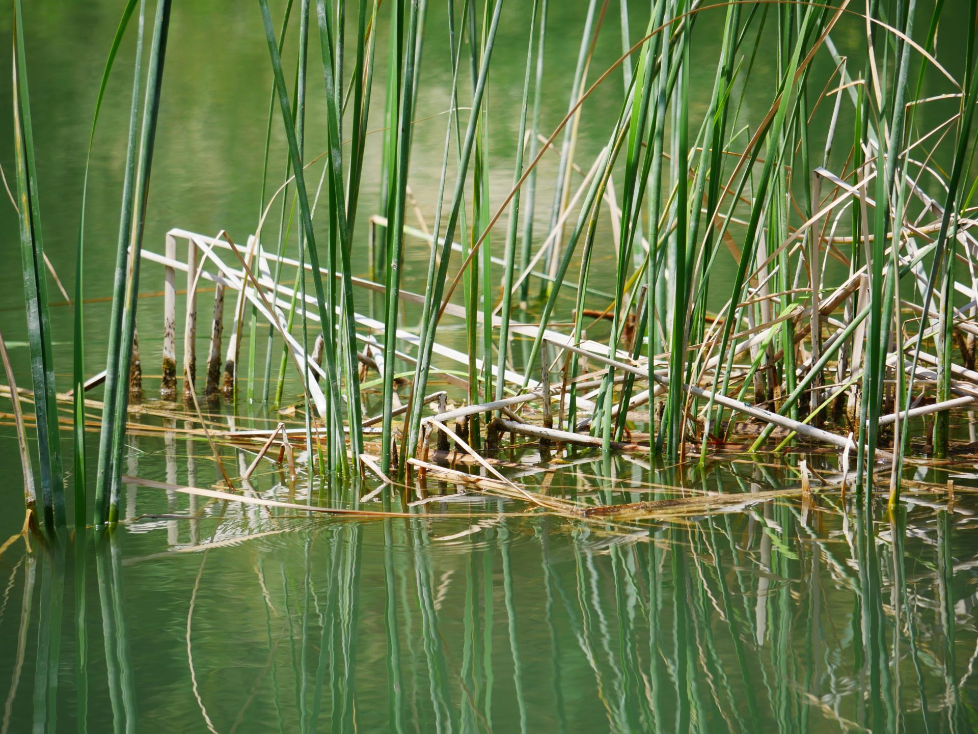 Le lac de la risse a callas dans le var provence 7