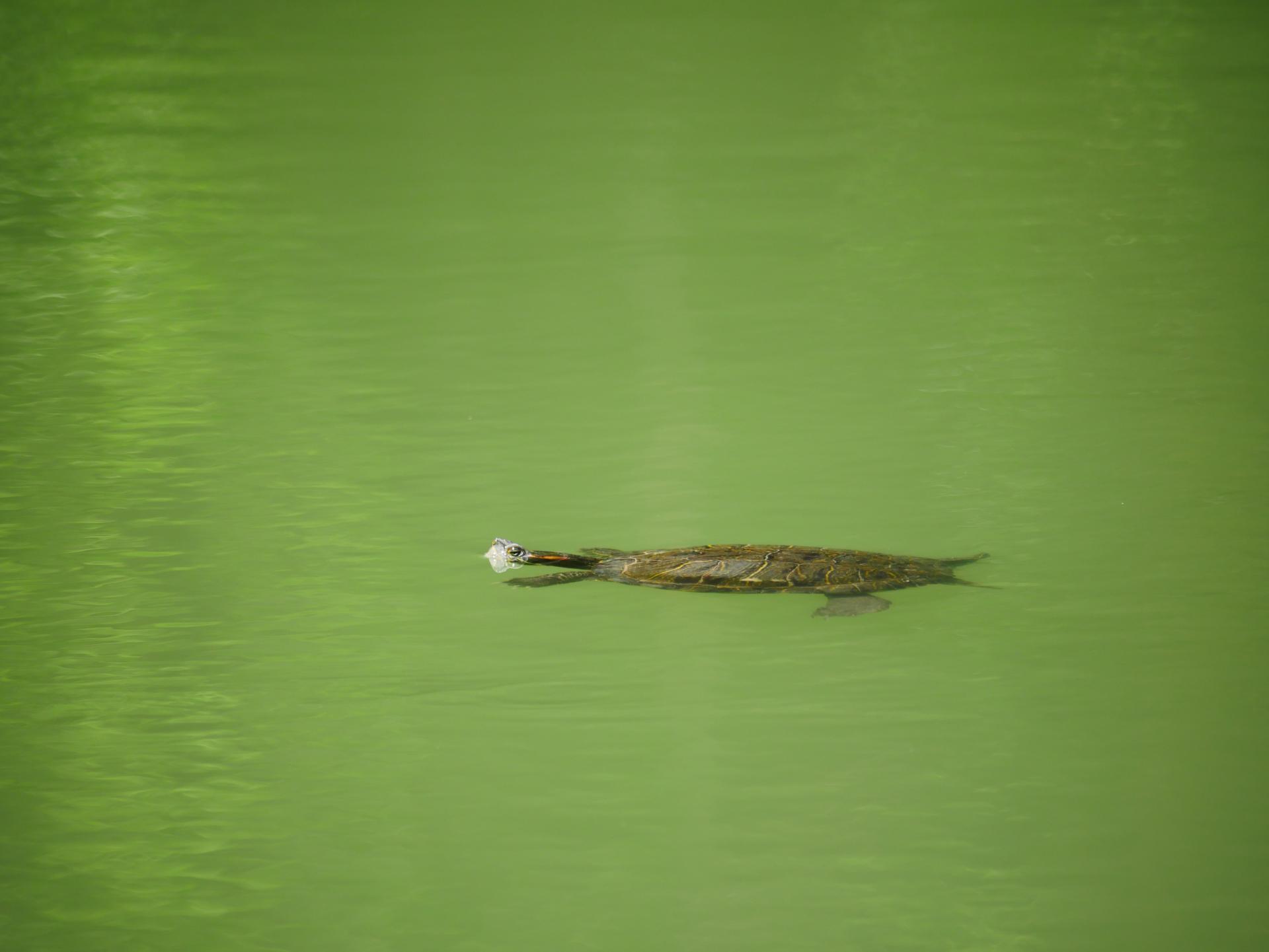 Le lac de la risse a callas dans le var provence 8