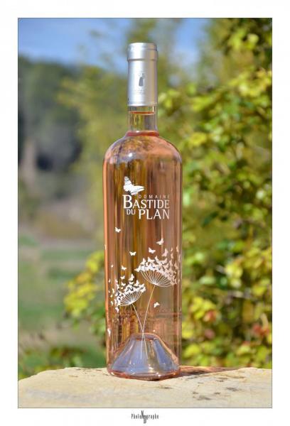 Rose de provence var provence gite spa gorges du verdon